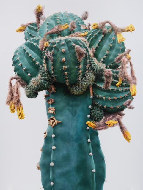 , 'Cactus No.93,' 2015, Johyun Gallery