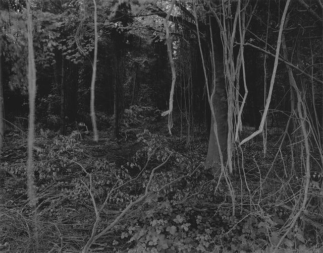 Gilbert Fastenaekens, 'Untitled #001', 1988-1996, Galerie Les filles du calvaire