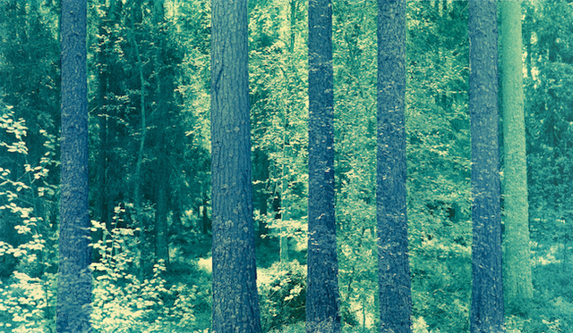 , 'Sweden 054 BYB,' 2013-2016, L. Parker Stephenson Photographs