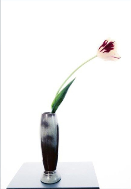 , 'Single Tulip, Red and White,' 2014, Andrea S. Keogh Art and Design