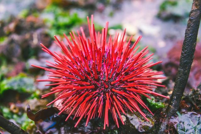 , 'Sea Urchin,' 2017, DATG Concept