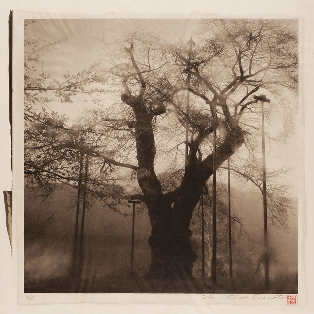 , 'In the Icy Fog. Shokawa Cherry tree in Gifu Prefecture,' 2016, Micheko Galerie