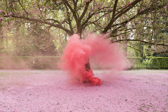 Isabelle & Alexis, 'Sceaux - Cherry Blossom tree giving birth to a pink cloud', 2014, B Lounge Art