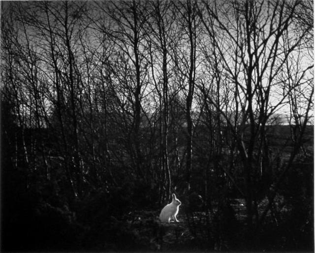 , 'Signilskar, Finland,' 1974, The Photographers' Gallery   Print Sales