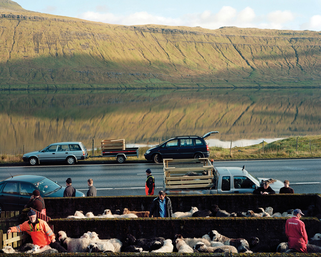 , 'Sheep Being Rounded Up for Slaughter, Skalabotnur, Faroe Islands,' , Pictura Gallery