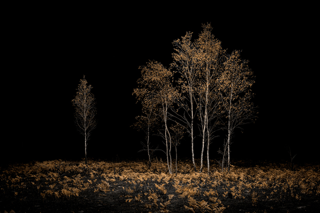, 'Burnt Place 01 - Birches,' 2019, MMX Gallery