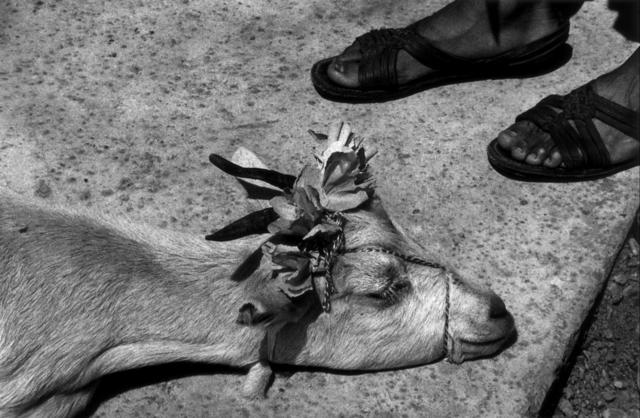 , 'Antes de la matanza (Before the slaughter), La Mixteca, Oaxaca,' 1992, Etherton Gallery