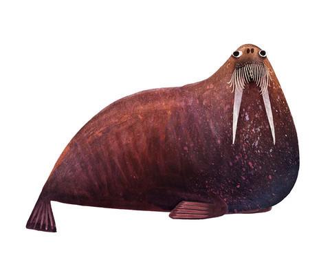 Brendan Wenzel, 'Atlantic Walrus', ArtStar