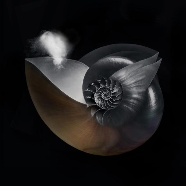 , 'Nautilus,' 2018, ARTE GLOBALE