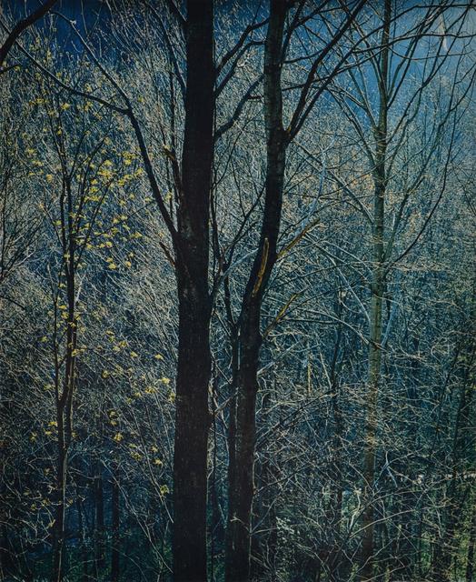 Eliot Porter, 'Great Smoky Mountains National Park', 1968, Scheinbaum & Russek Ltd.