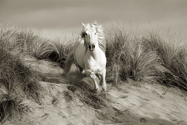 , 'Stallion in the Dunes,' , FLOWER + HEWES