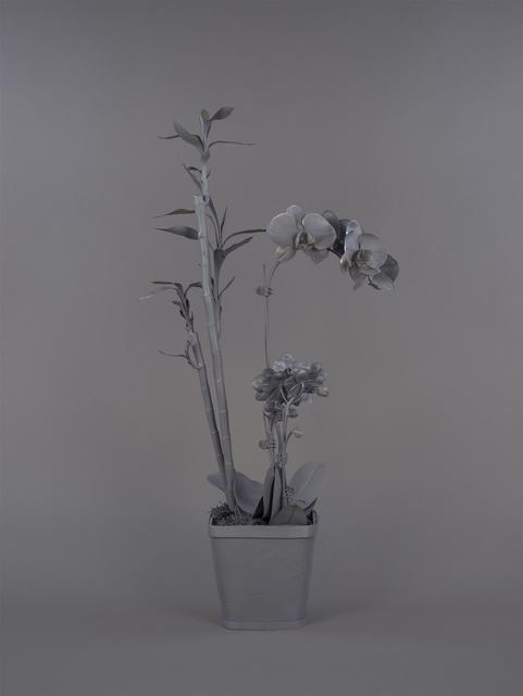 , 'Neutral Orchids (Phalaenopsis + Dracaena sanderana 2),' 2016, RYAN LEE