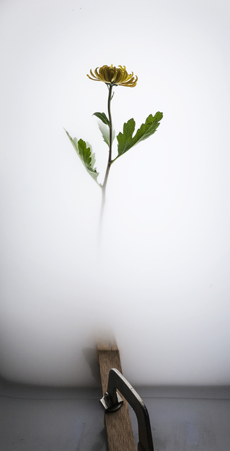 , 'Still Life 006 - Chrysanthemum,' 2017, Galerie du Monde