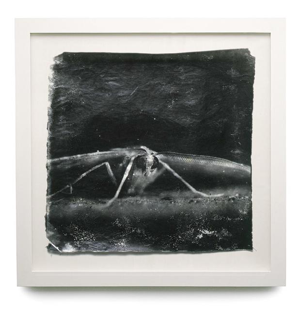 , 'Attracted to Light #19,' 2000-2006, HackelBury Fine Art