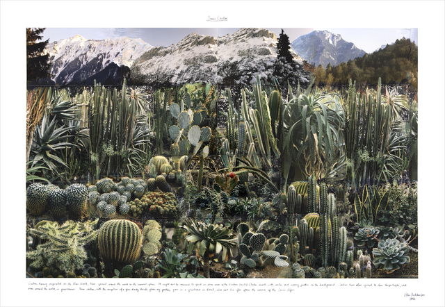 , 'Swiss Cactus,' 1993, Gaa Gallery