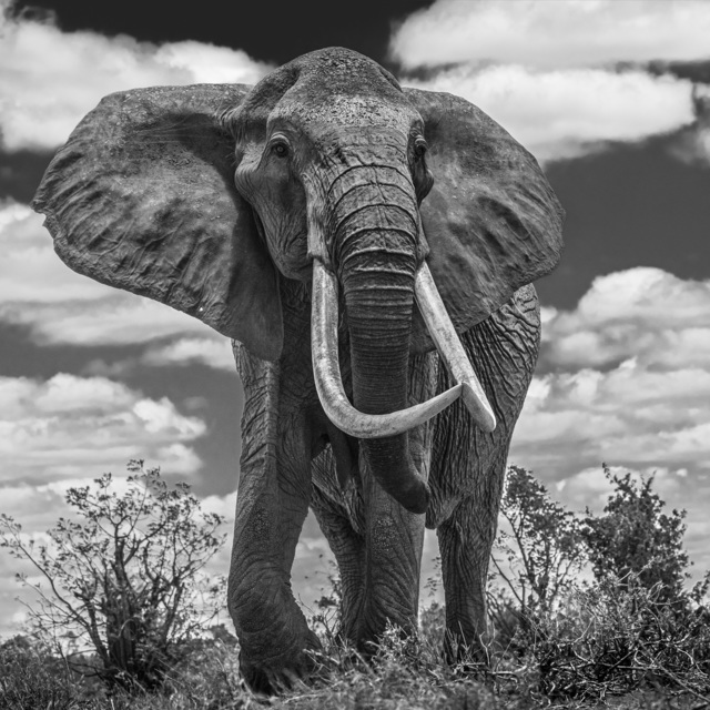 David Yarrow, 'Tsavo East', 2017, Photography, Archival Pigment Print, Hilton Asmus