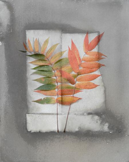 , 'Fall Sumac,' , Alan Klotz Gallery