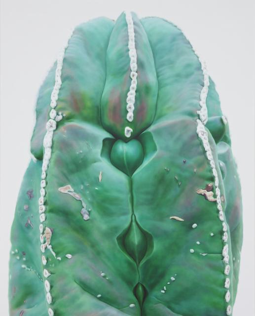 , 'Cactus No.70,' 2011, Johyun Gallery