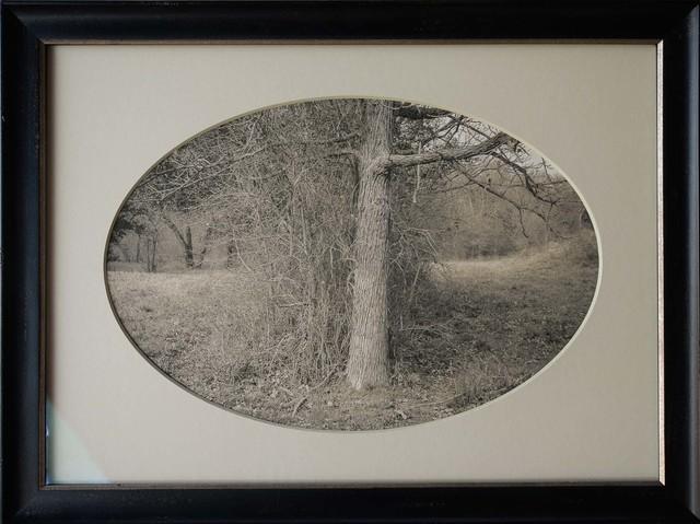 , 'Oak Tree with Brush, Plum Creek, Texas,' , Etherton Gallery