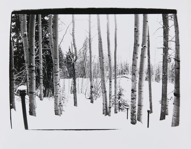 Andy Warhol, 'Birch Trees in Aspen', 1979, Photography, Silver Gelatin Print, Hedges Projects