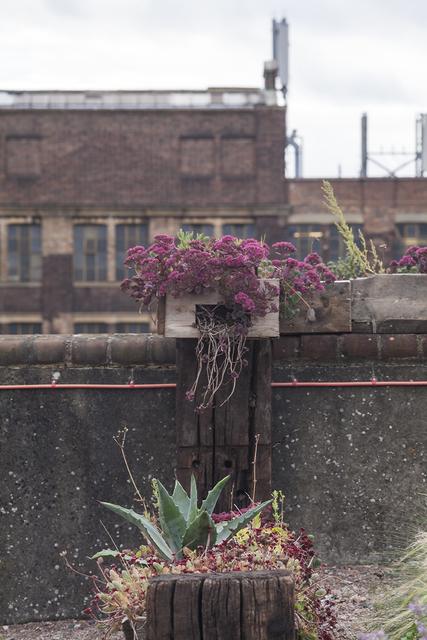 , 'Derek Jarman's Garden,' 2013, Bold Tendencies