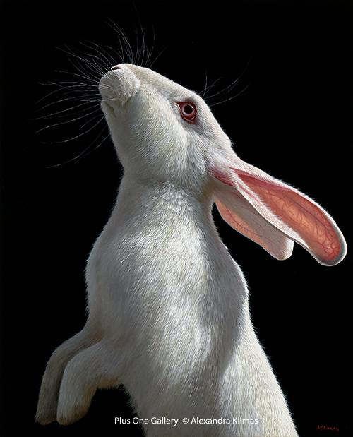 Alexandra Klimas, 'Snowy the Rabbit II', 2018, Plus One Gallery