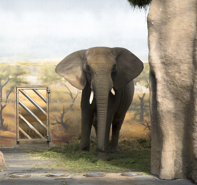 , 'Elephant and Forage,' , Galerie Dumonteil