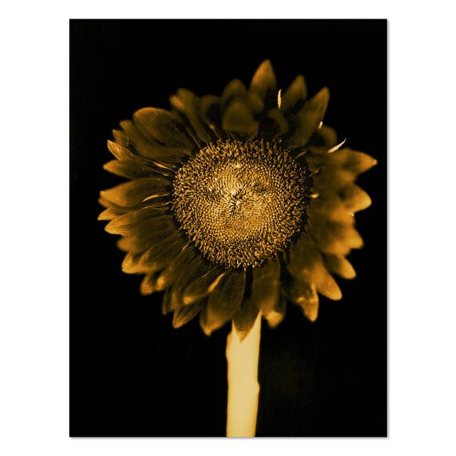 Chuck Close, 'Sunflower', 2011, MLTPL