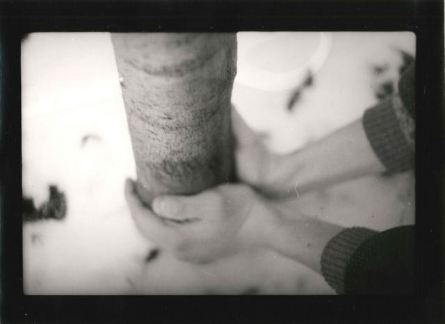 , 'Warm up a Tree, 15x18 cm silver print,' 1980, Alberto Torri