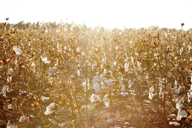 , 'Cotton Fields,' ca. 2014, Benrubi Gallery