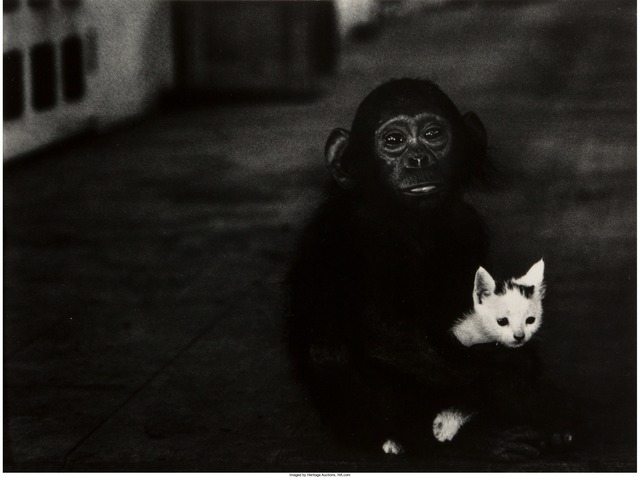 W. Eugene Smith, 'Egret in Flight and Monkey & Kitten, Africa (two works)', 1954, Heritage Auctions