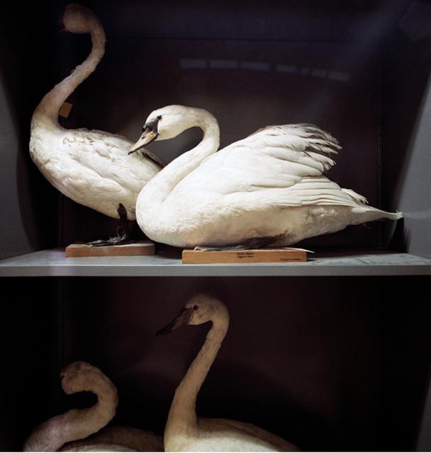 , 'Booth's Bird Museum,' ca. 1995, Clark Gallery