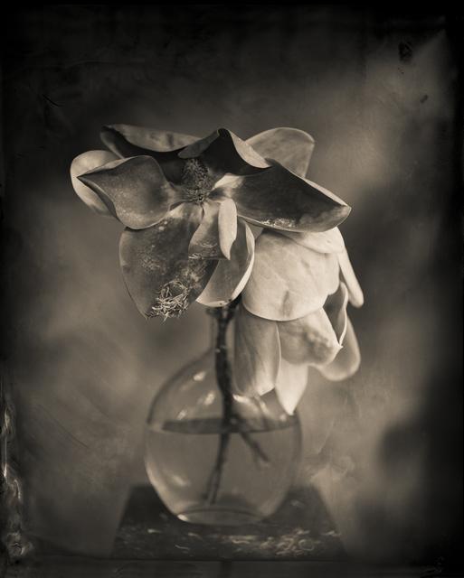 , 'Magnolia,' 2014, Etherton Gallery