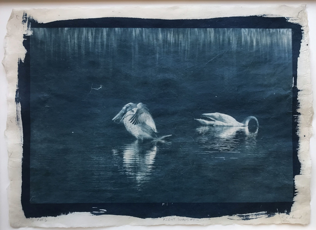 Randy Richmond, 'Night Swans #1', 2019, Olson Larsen Gallery