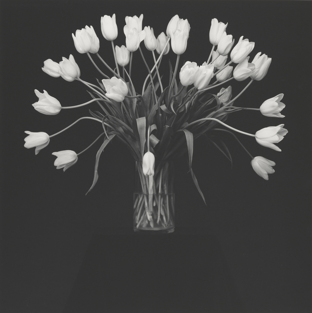 , 'Tulips,' 1988, J. Paul Getty Museum