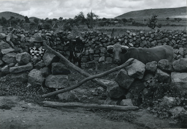 , 'Rural Scene with Bulls and Peasant,' ca. 1975, Be-hold