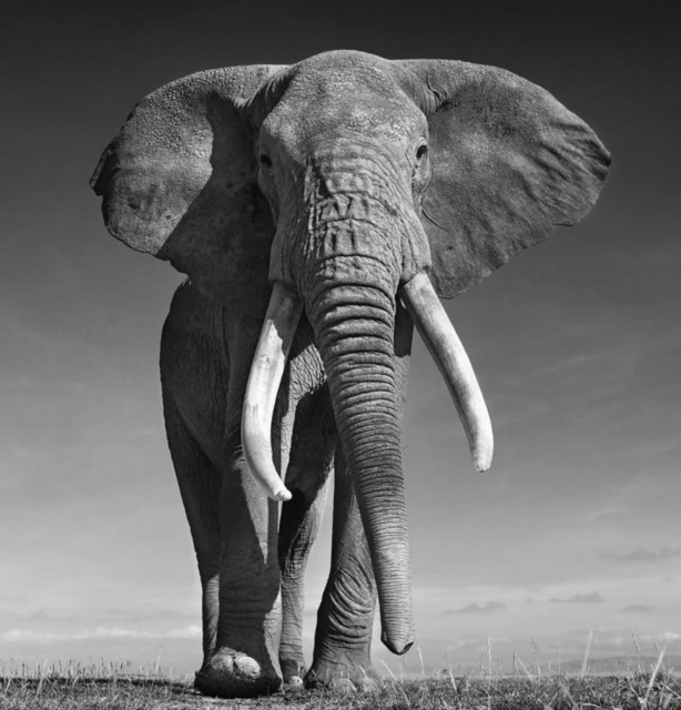 , 'The Don, Amboseli, Kenya,' 2017, Holden Luntz Gallery