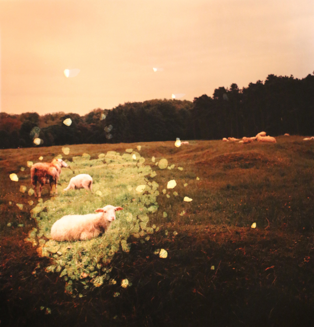 , 'Vimy Ridge Crater and Sheep, France,' 2014, Newzones