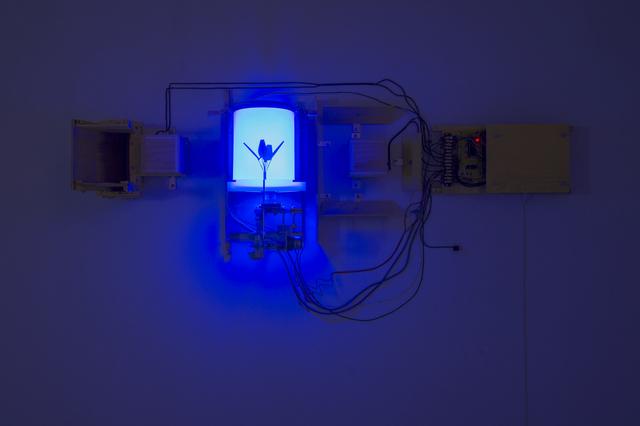 , 'Blue Flower,' 2011, McClain Gallery