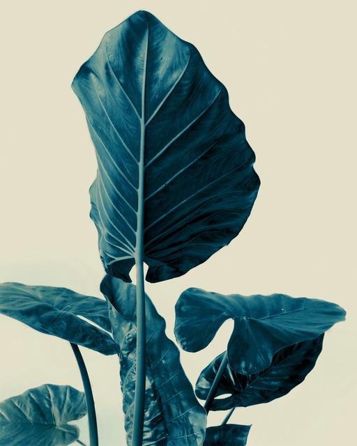 , 'Alocasia-3D_US,' 2000, Galerie f5,6