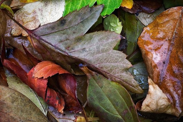 , 'Fallen Leaves #10,' 2018, Motion Gallery