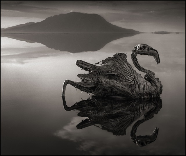 Nick Brandt, 'Calcified Reflected Flamingo, Lake Natron 2010', 2010, photo-eye Gallery