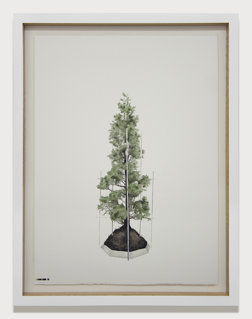 , 'Prototipos para una naturaleza rehabilitada (4.1),' 2014, Galeria El Museo