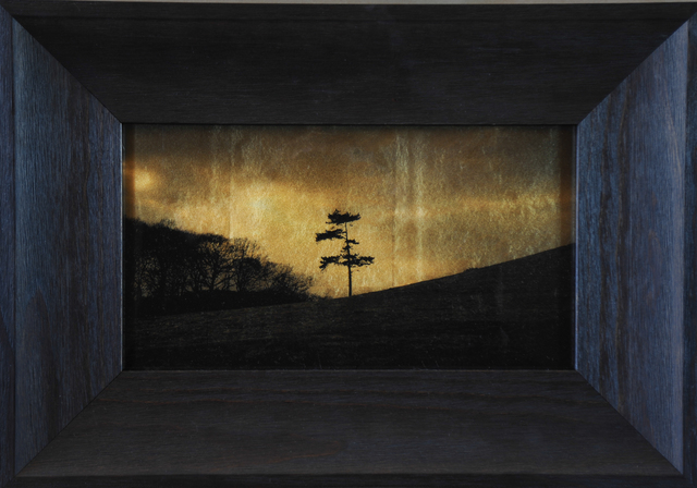 , 'Lone Tree, Midland, UK,' 2014-2015, Catherine Edelman Gallery