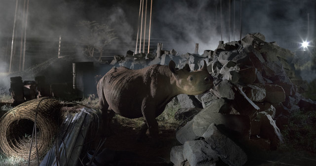 , 'Construction Site with Rhino,' 2018, Fahey/Klein Gallery