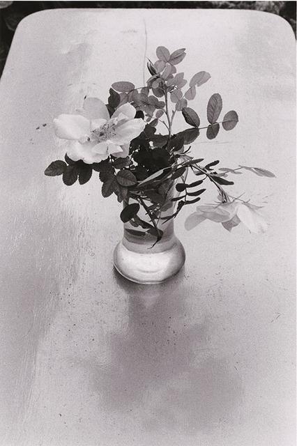 Edouard Boubat, 'Fleurs des Champs, Forêt de Fontainebleau', 1980/1981, Catherine Couturier Gallery