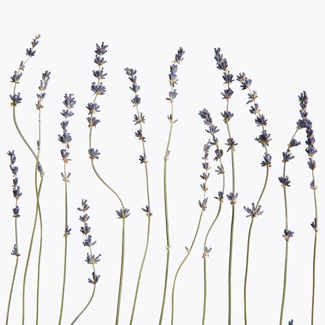 Inez & Vinoodh, 'Lavender', 2013, Gagosian