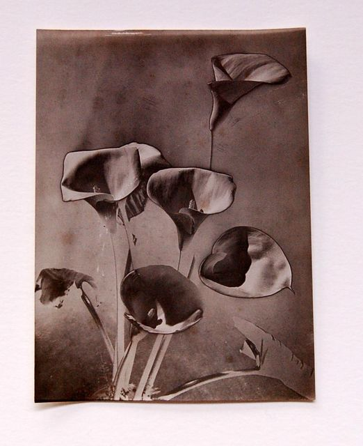 , 'Calla lillies,' 1930, SAGE Paris