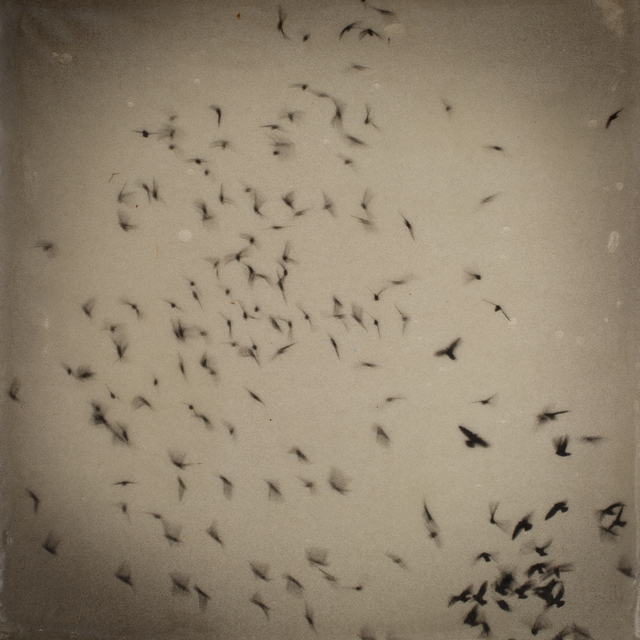 , 'Portland, Vaux's Swifts, 100 Memories,' 2015, G. Gibson Gallery