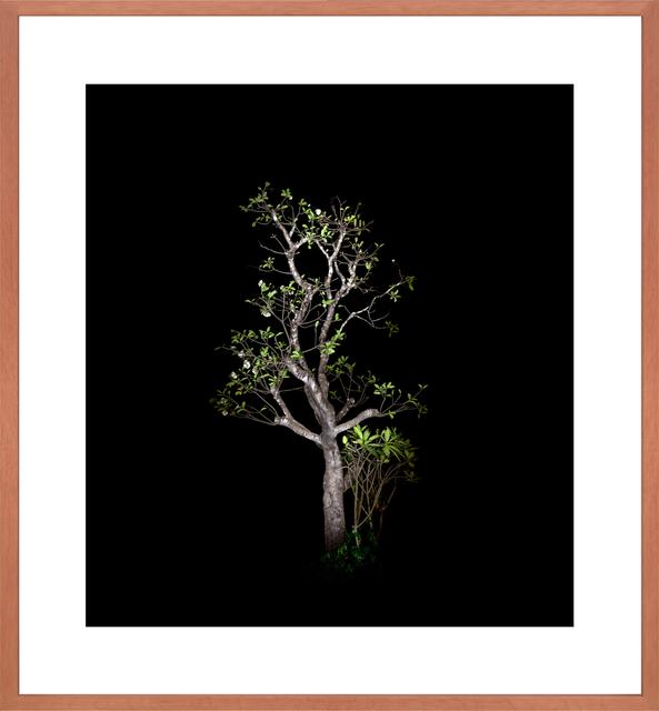 , 'Baum #5,' 2012, Bernhard Knaus Fine Art